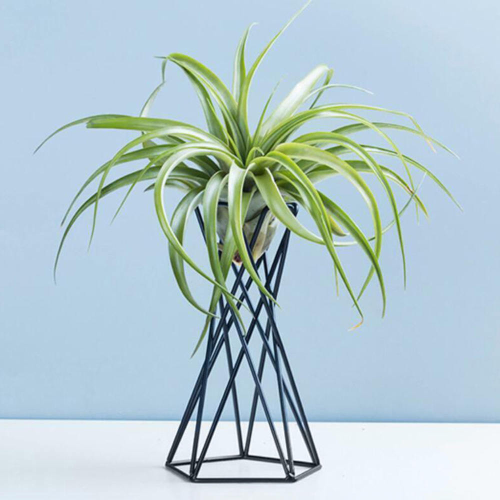 Nordic Style Air Plant Holder Metal Flower Pots Stand Geometric Iron Tillandsia Holder Table Home Garden Ornaments