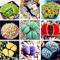 100 шт., живые камни, семена суккулентов, кактусов, натуральные РЕДКИЕ смешанные растения Lithops, цветы, эссенция, увлажняющий бальзам для губ SZ5