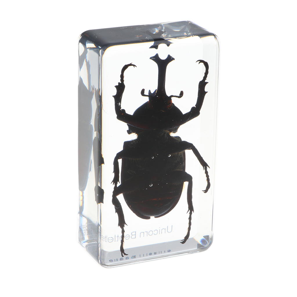 Insect Wasp in Clear Paperweight Education Insect Specimen Collection