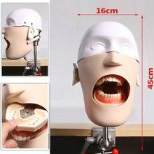 نموذج جديد عالي الجودة من الفولاذ المقاوم للصدأ لرأس الأسنان مانيكينز فانتوم لتدريب الأسنان نموذج محاكي للعلوم الطبية