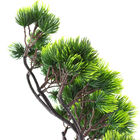 Pine Tree Branches A...