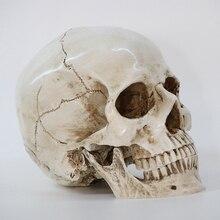 Реплика на голову человека из смолы, медицинская модель, высокое качество, декоративное ремесло, череп в натуральную величину, 1:1, Хэллоуин, украшение для дома