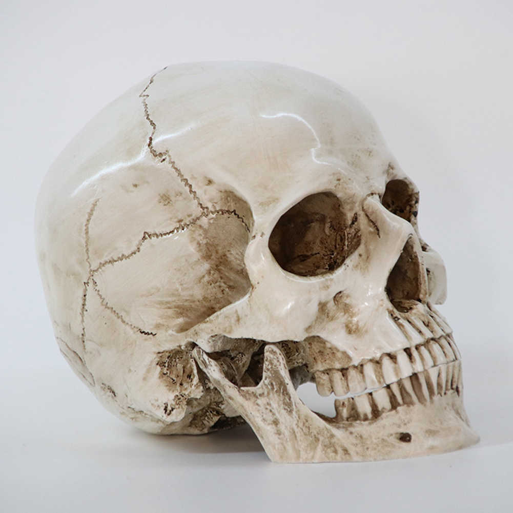 Human Head Resin Replica Medical Model High Quality Decorative Craft Skull Life Size 1:1 Halloween Home Decoration