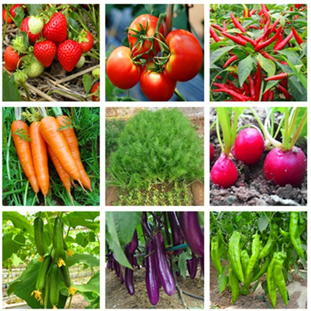 Vegetable Seeds Tomatoes Chives Cilantro Leek Lettuce Seeds Balcony Garden Potted Four Seasons Sowing Easy To Plant