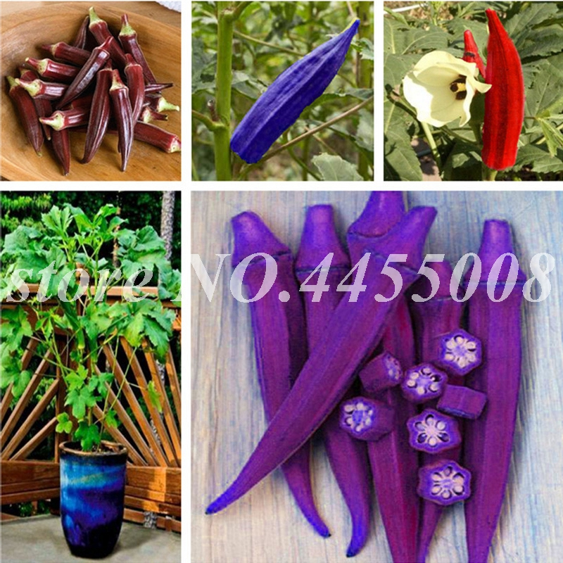 30pcs/bag Okra Bonsai,Organic Non GMO Food For Kidney Garden Supplies For Fun Countryside Garden