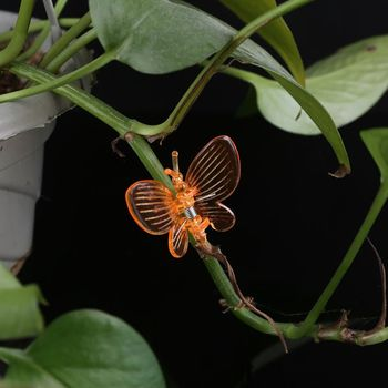 30 sztuk motyl orchidea klipy klipy roślin kwiat ogrodowy winorośli wsparcie klipy śliczne tanie i dobre opinie Z tworzywa sztucznego Colorful 30 Pcs