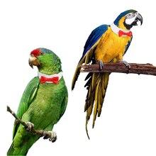 Попугай одежда с птицами костюм ручной работы милый шейный галстук-бабочка галстук маленькая средняя птица кошка Уход регулируемые украшения Аксессуары