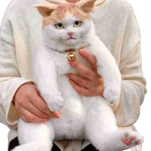 Novelty Cute Stuffed Cat Backpack Funny Realistic Lifelike Animal Plush Toy Bag wholesales