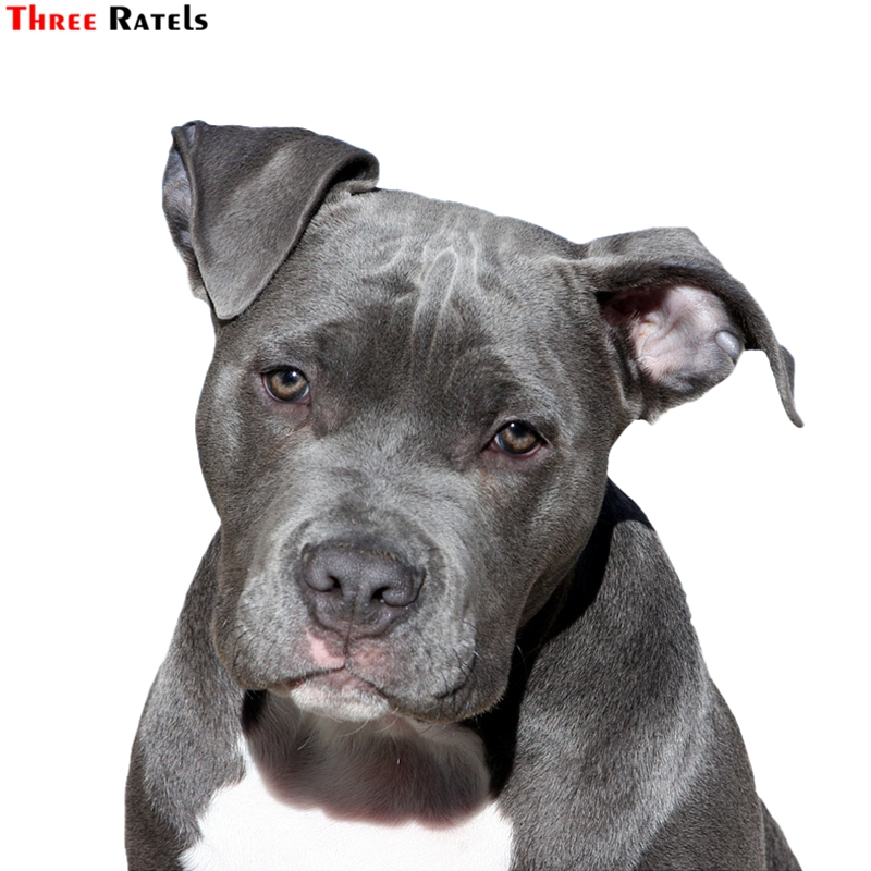 Three Ratels FTC-804# 14x15.4cm Cute American Pit Bull Terrier American Staffordshire Dog  Window Decals Car Styling Car Sticker
