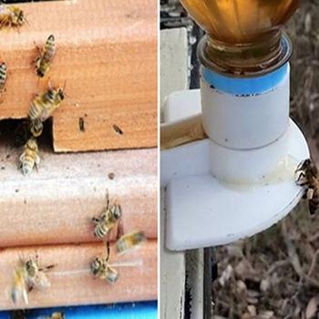 10 sztuk poidełko dla pszczół miód wejście podajnik pszczelarstwo Cap wątku podajnik pszczelarstwo wyposażyć narzędzie pszczelarskie królowa System hodowli h2 tanie i dobre opinie JIECARE CN (pochodzenie) Bee Hive Beekeeping tools Bee Feeder Honey Entrance White 10 Pieces