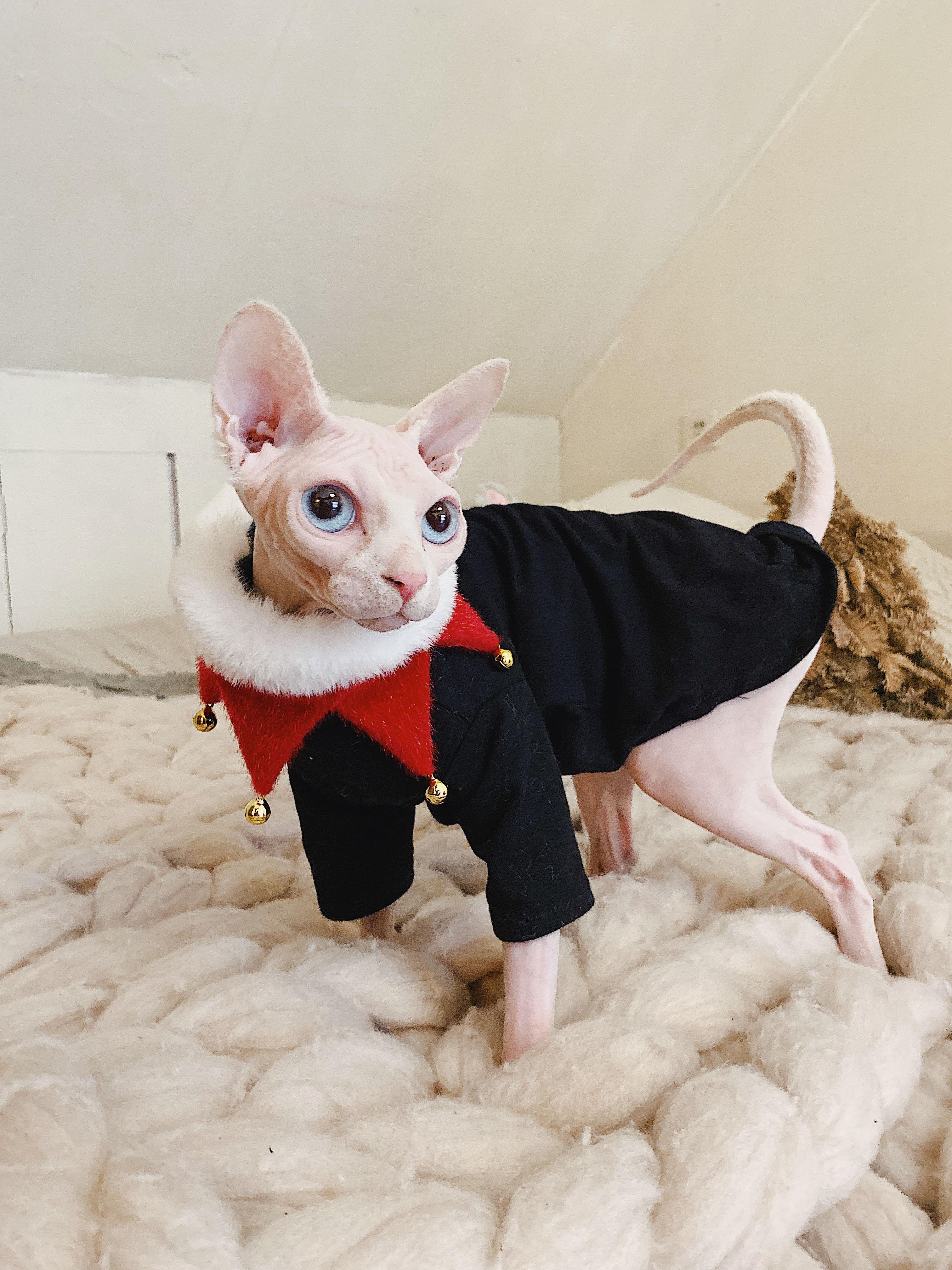 preto camisa branca para gato de estimação camiseta
