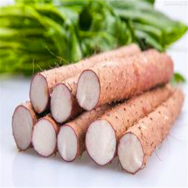Hot Sale Chinese Yam Bonsai 100 Pcs/Packing Rare Tonifying Spleen Vegetable Rhizoma Dioscoreae Plants For Garden