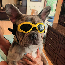 Pet accessories cat dog glasses goggles foldable anti-UV sunglasses waterproof pet photo props for small medium product pug