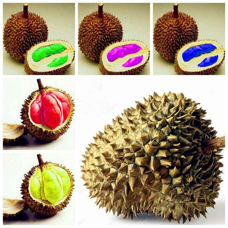 Новое прибытие 20шт очень вкусные дуриан король тропических фруктовых деревьев бонсай гигантское дерево бонсай гигантские семена деревьев.
