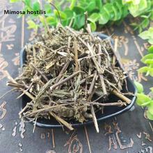Высококачественная китайская медицина органический корень mimosa