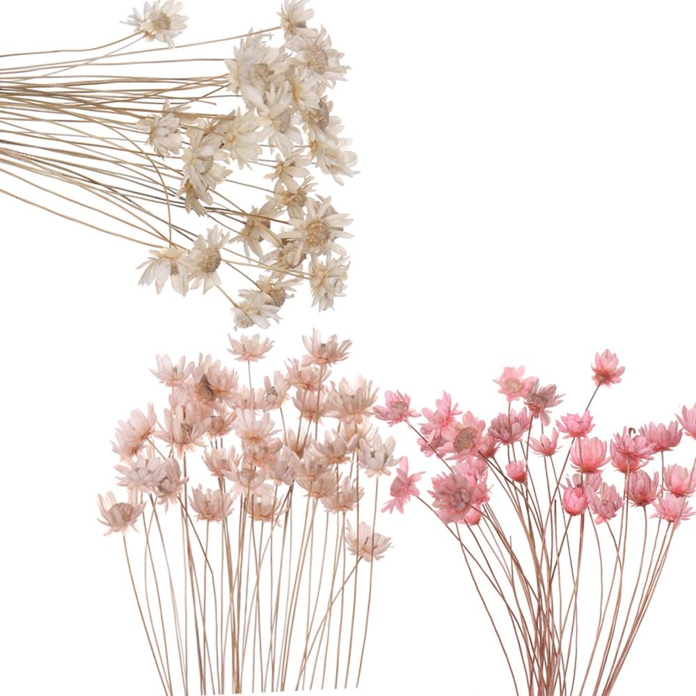 30 шт., декоративные сушеные цветы, маленькие Маргаритки