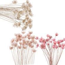 30 pçs flores secas decorativas mini margarida pequena estrela flores bouquet natural plantas preservar floral para o casamento decoração de casa