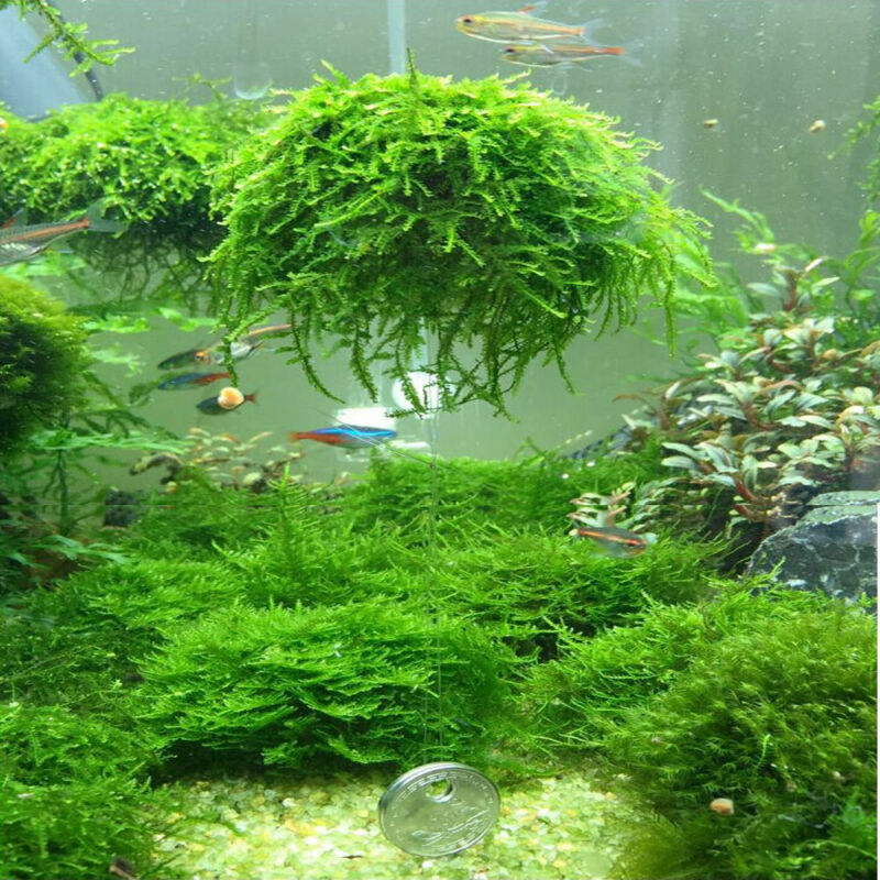 New Fashion Aquarium Marimo Moss Ball Live Plants Filter For Java Shrimps Fish Tank Newest