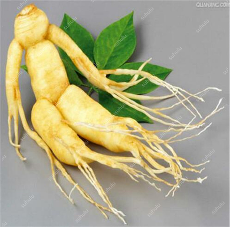 Sale! 100 Pcs Chinese Ginseng , Panax Ginseng Plantas , Potted Bonsai Plant Flower Flores For Home Garden, The Budding Rate 97%