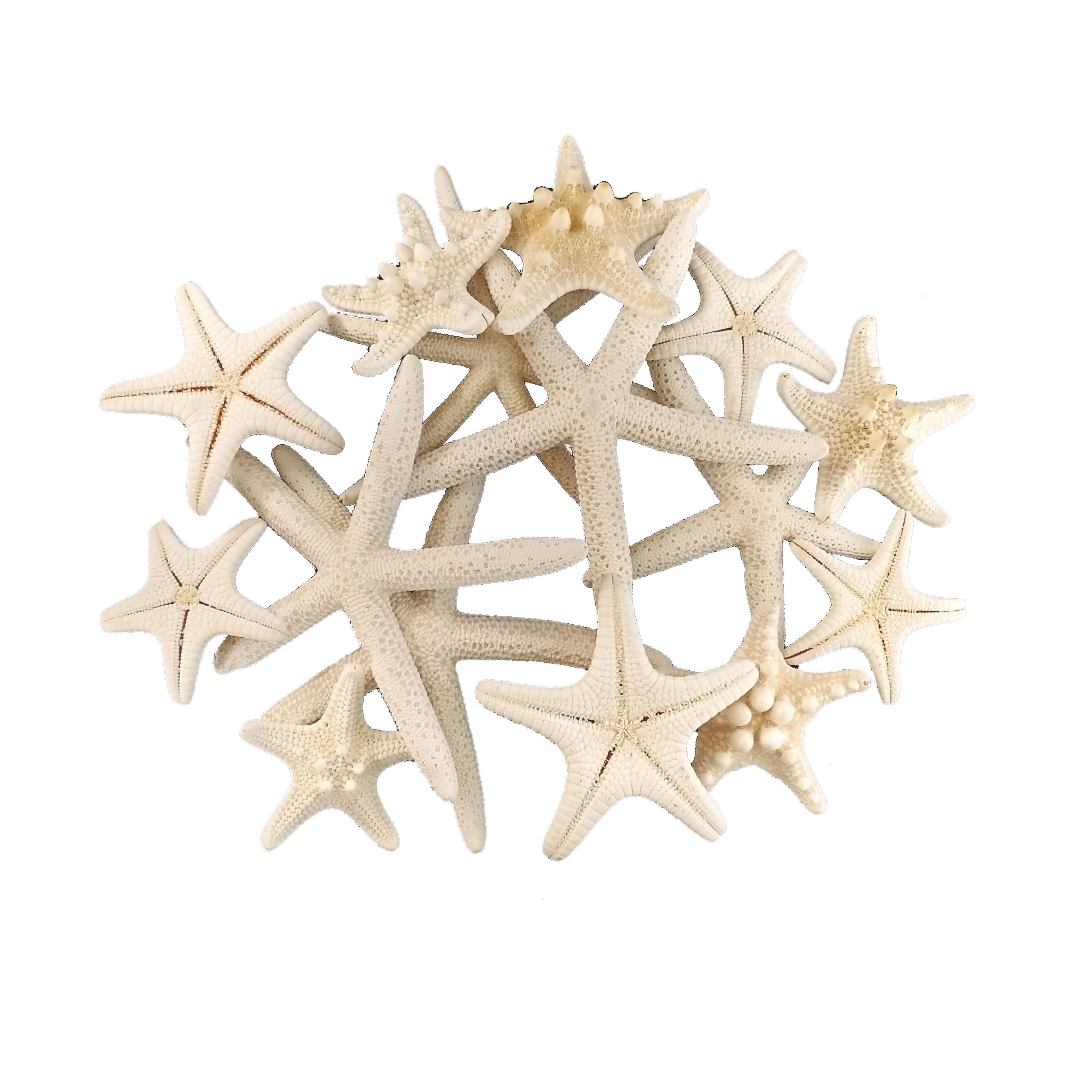 4-8cm 1-6Pcs White Starfish Craft Decoration Natural Finger Sea Star Wedding Decor Seashells Seafish Party Beige Seastar Crafts