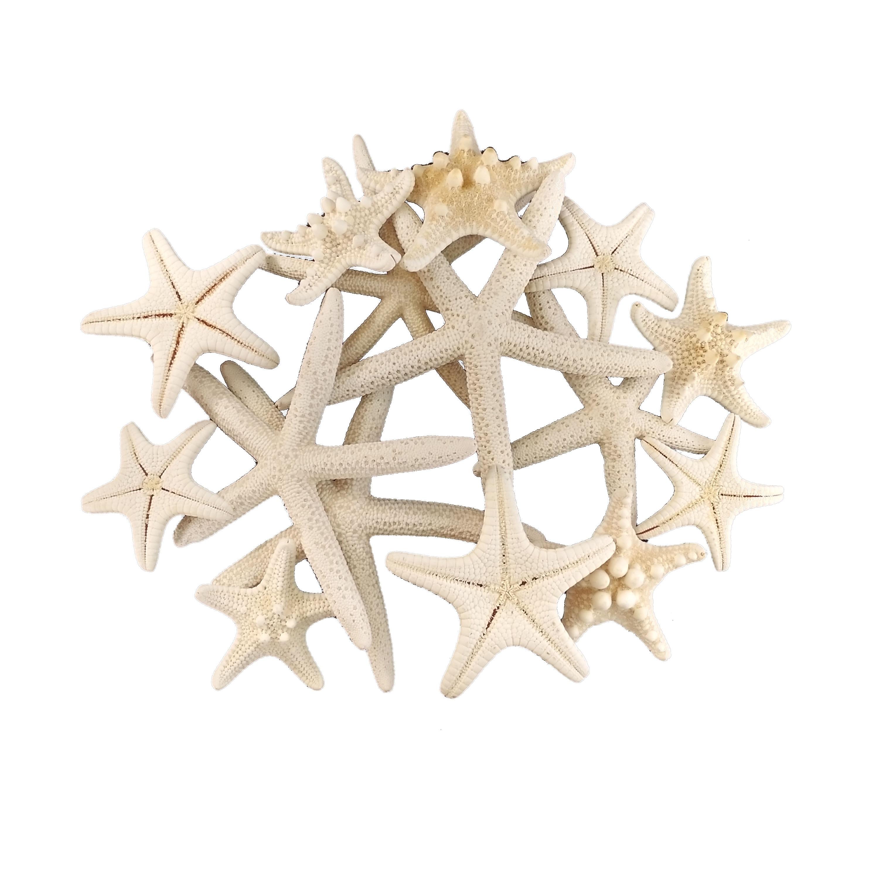 4-8cm 1-6Pcs White Starfish Craft Decoration Natural Finger Sea Star Wedding Decor Seashells Seafish Party Beige Seastar Crafts