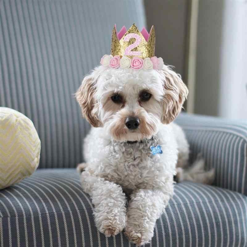 Sombrero popular para fiesta de cumpleaños con diseño de flores, para gatos, perros y mascotas, accesorio para Cosplay, tocado con número 1-9