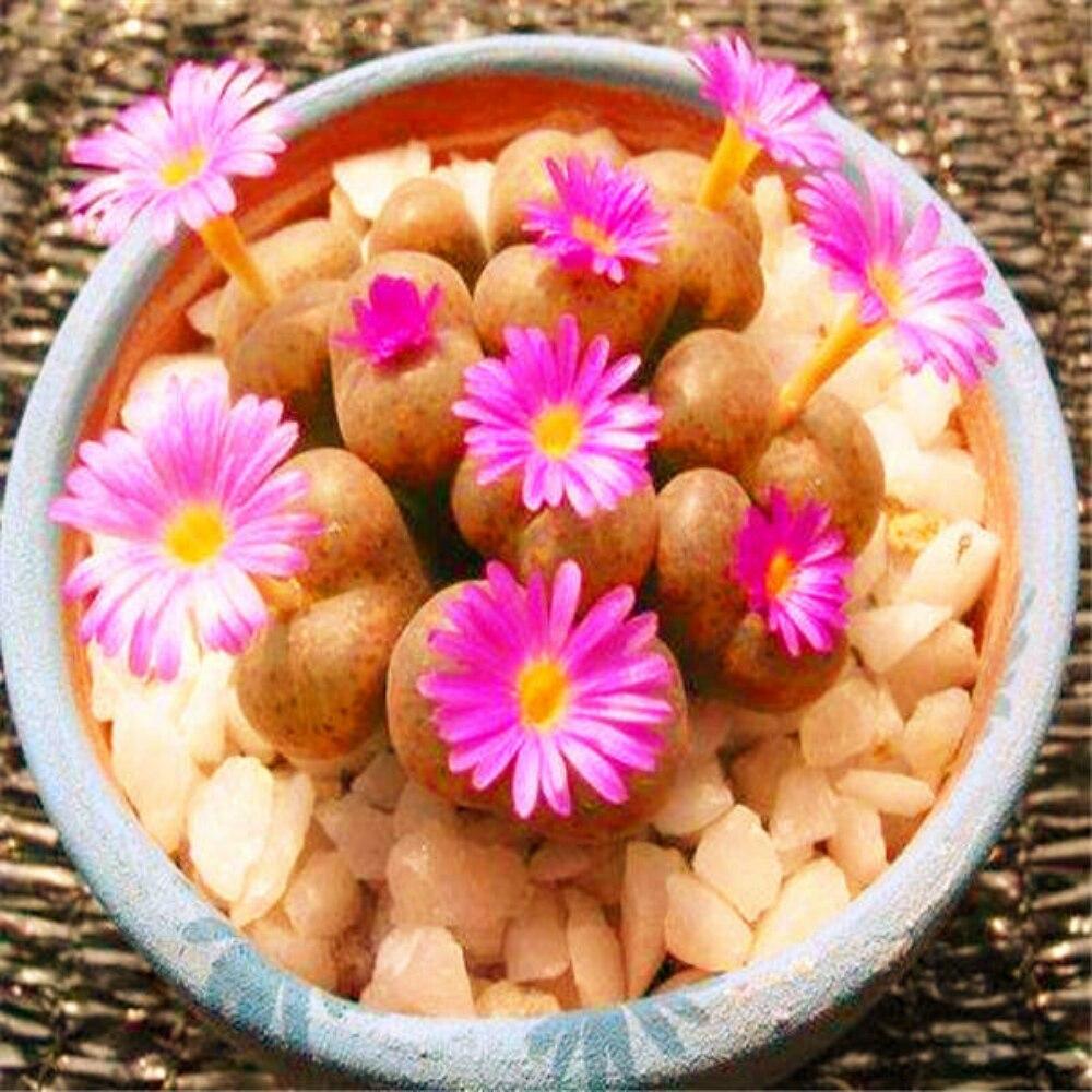 Plant Bath Salts 130Pcs Jasmine Essence ZWPZ-05