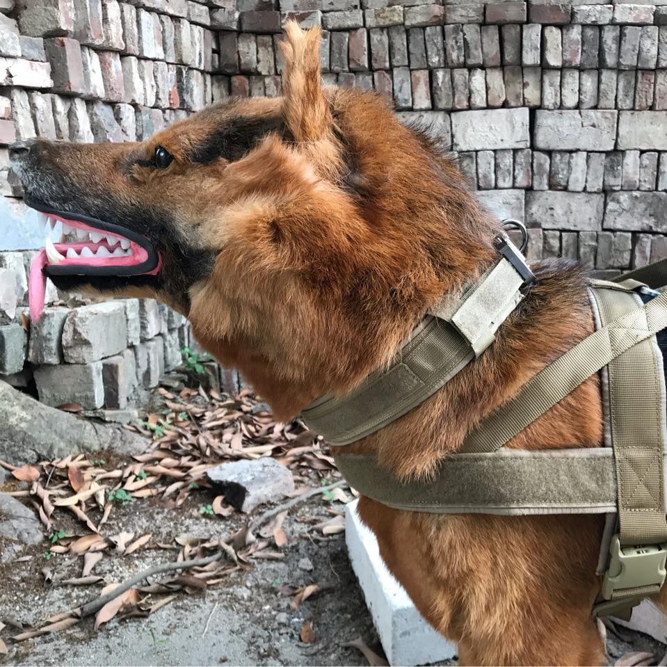 Adjule Necklace Choker Large Dogs