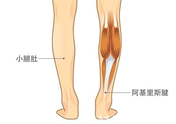 常揉小腿2部位 让脚踝变柔软 防跌倒