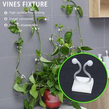 1 5 sztuk niewidzialne ściany Rattan zacisk klip niewidzialne ściany winorośli wspinaczka przyklejony hak Rattan klips do mocowania uchwyt wsparcie dla roślin 3 rozmiar tanie tanio dropshipping