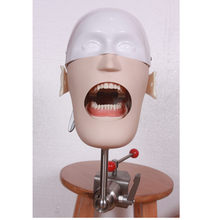 Stainless Steel Head Model Dental Manikins Phantom Dental Training Simulator Medical Science Model 2019 high quality new(China)