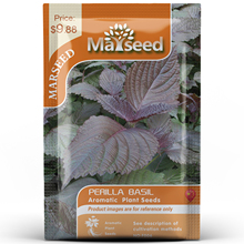 American Heirloom MARSEED Perilla Basil Flower Vegetables Seedsplants Seedling Garden Outdoor