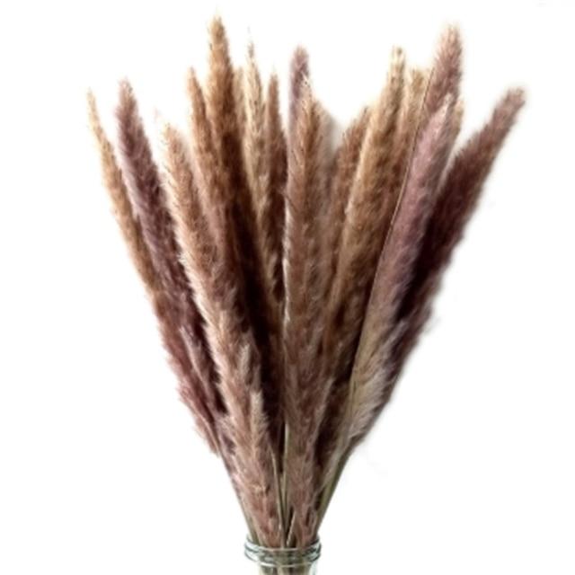 Amcer 50pcs 17 Dried Pampas Grass Plumes Natural Dried Plants Phragmites Coummuis Reed Flower Stems Bunch for Flower Arrangements Home Decor