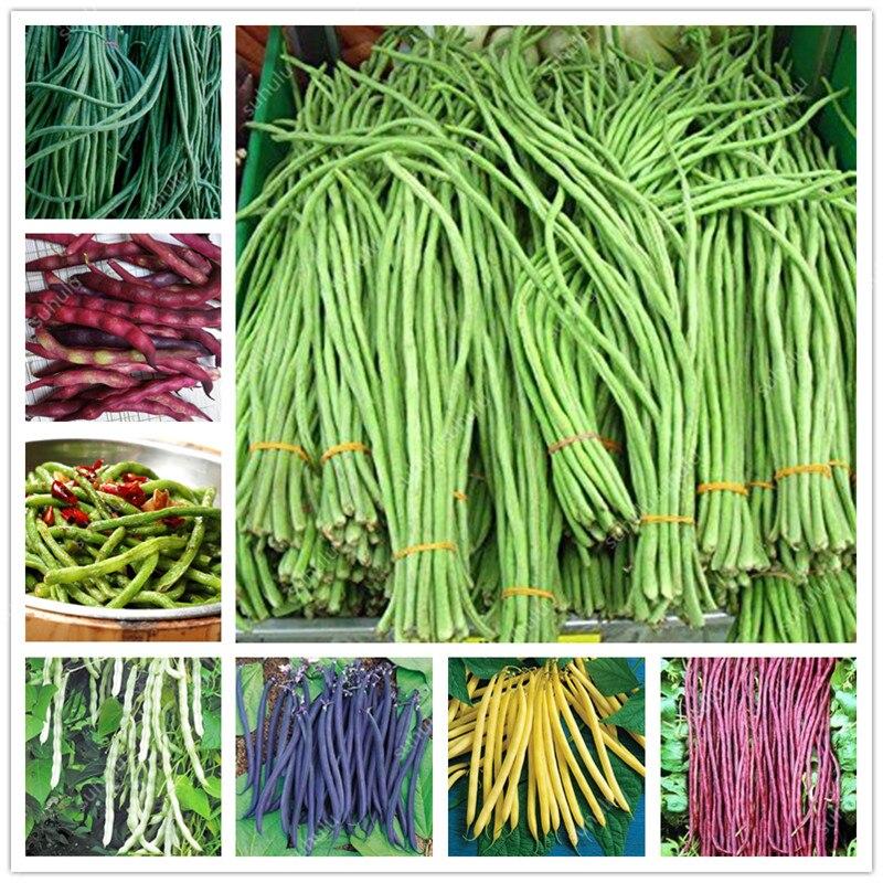 20 Pcs Chinese Bean Bonsai, Vanilla Beans Bonsai,High-Yield Plant,Delicious Vegetable Edible Food Balcony Potted Garden Plants