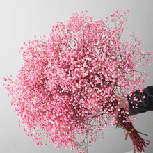 Natural Fresh Dried Preserved Flowers Gypsophila paniculata,Baby