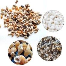 100pcs Natural Conch Shells Aquarium Decoration Home For DIY Crafts Or Party Decor Sea Beach Shell Seashells