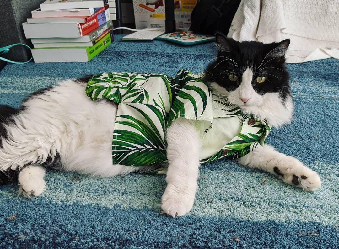hawaiian shirt for cat