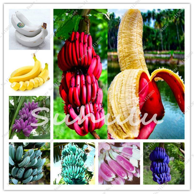 Plant Flower Bath Salts Mini Rainbow Banana Essence 100Pcs XZZ-271