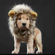 Lion Mane Costume for Cat & Dog - Pet Wig Clothes for Halloween Party(China)