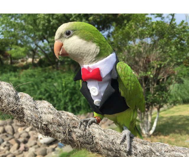 Parrot Cocktail Suit With Snazzy Bowtie  3