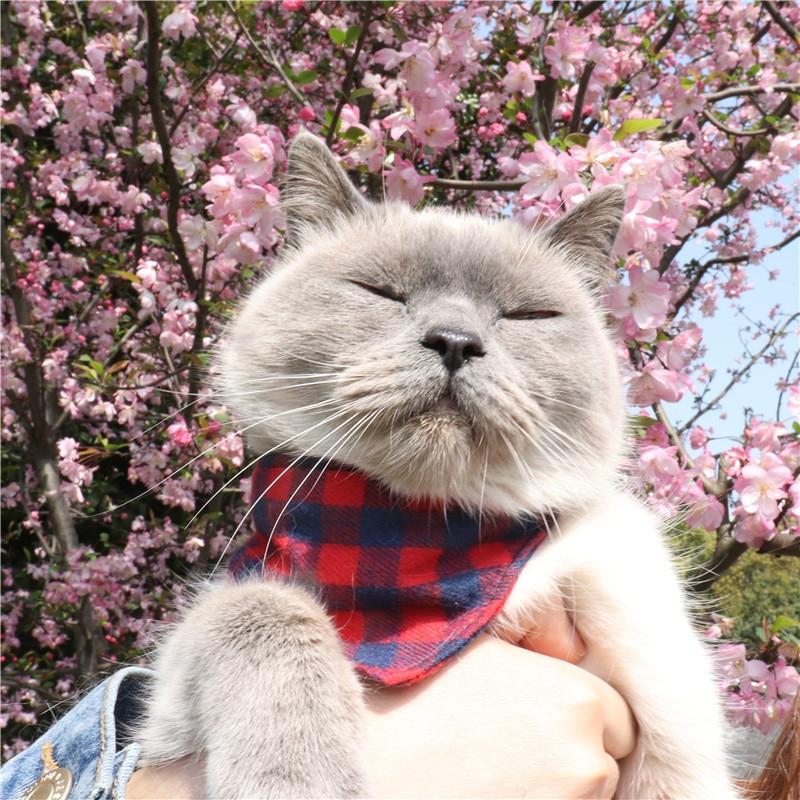 Amin Lattice 2019 New Products British Style Pet Plaid Neck Ring Dog Neck Ring Cat Neck Ring
