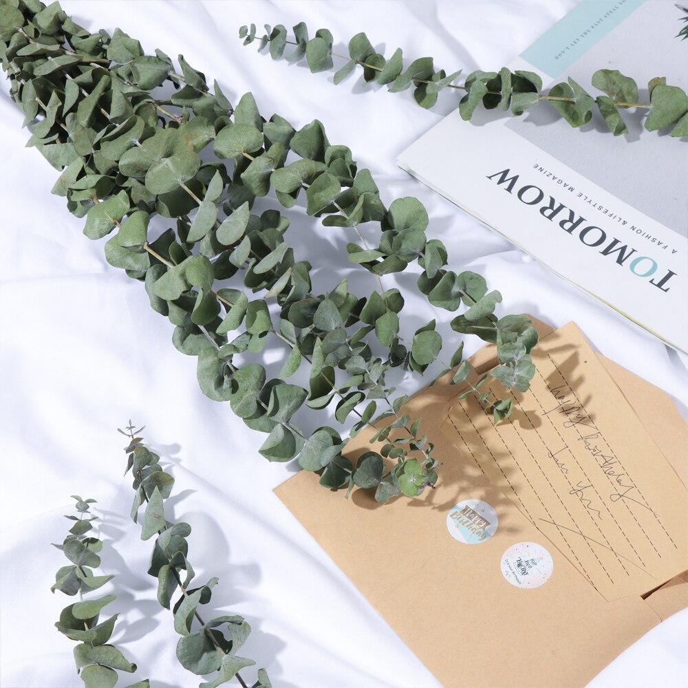10 pçs bouquet natural eucalipto folhas ramos hastes secas flor real palnt para decoração de casa casamento ornamento festa suprimentos