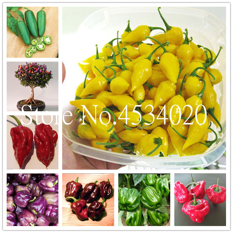 Sale! 100 Pcs Color Chili Peppers Bonsai ,Capsicum Annuum,Capsicum Frutescens,Balcony Vegetables Bonsai Mini Hot Pepper Plant