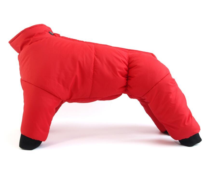 Köpek montu