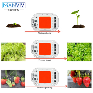 Image 2 - 5Psc LED Grow COB Chip PhytoLamp Full Spectrum 220V 110V 20W 30W 50W DIY For Indoor Plant Seedling Grow Flower Growth Fitolamp