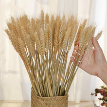 50 pcs Dried Flower Decor Bundle Dry Wheat Dried Flowers Big Pack Flowers for Weddings Natural Home Decorations Artificial Wheat