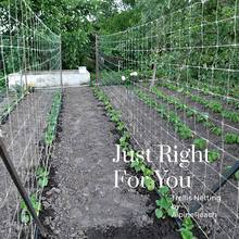Filet en treillis pour plantes, en Polyester, robuste, Support pour plantes, vigne, escalade, filet de culture hydroponique, accessoires de jardin, multi-usage