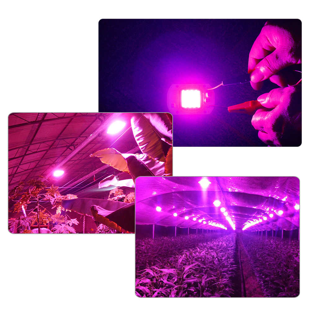 Led Licht Groeien Cob Chip Volledige Spectrum Phyto Lamp Diode Aquarium Plant Light Led Matrix 220V 110V 20W 30W 50W 70W Licht Groeien