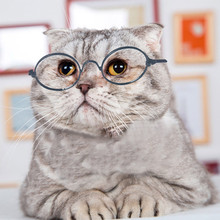Cool Sunglasses Photos-Props Cats Dogs Cute for Fashion Dog-Eye-Protection Pet-Supplies