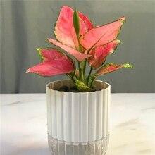 Белый ABS% 2BPP Hydroponic Resin Flower Pots Loblolly Pine Pocket Leaf Alocasia Plant Flower Pots
